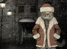 Gato no revestimento 3 do inverno fotografia de stock