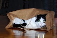 Gato no saco de papel Fotos de Stock Royalty Free