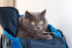 Gato no saco dos esportes Fotos de Stock Royalty Free