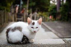 Gato no santuário de Fushimi Inari, Kyoto, Japão Fotos de Stock