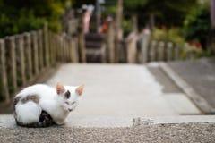 Gato no santuário de Fushimi Inari, Kyoto, Japão Imagem de Stock