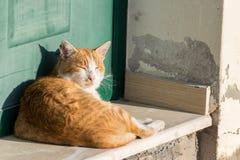Gato no sol Imagens de Stock Royalty Free