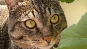 Gato no sol, cercado por plantas domésticas Foto de Stock