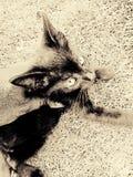 Gato no tan negro Imagen de archivo libre de regalías