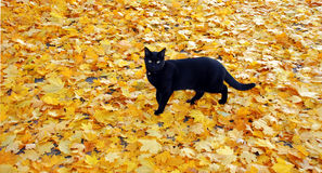 Gato no tapete Imagens de Stock Royalty Free