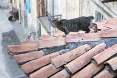 Gato no telhado Imagens de Stock Royalty Free