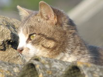 Gato no telhado Foto de Stock