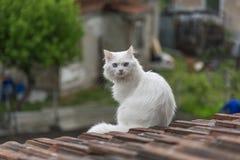Gato no telhado Imagens de Stock