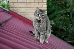 Gato no telhado Fotografia de Stock Royalty Free