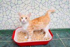 Gato no toalete Fotos de Stock Royalty Free