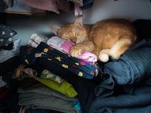 Gato no vestuário Fotografia de Stock