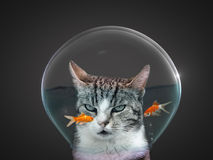 Gato no vidro do peixe dourado Imagens de Stock Royalty Free