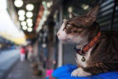Gato no Wayside Imagem de Stock