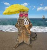 Gato nos óculos de sol com gelado na praia 2 fotografia de stock