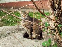 Gato nos ramos Fotografia de Stock