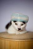 Gato novo com o chapéu do estilo de jamaica Fotografia de Stock Royalty Free