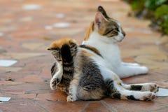 Gato novo do gatinho e da mãe foto de stock