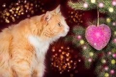 Gato novo do gengibre, olhares surpreendidos na árvore de Natal Imagens de Stock Royalty Free