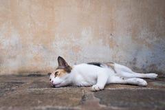 Gato novo preguiçoso que encontra-se na terra e que olha de lado fotografia de stock