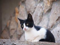 Gato novo, preto e branco fotografia de stock royalty free
