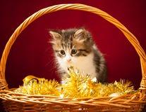 Gato novo que joga com ornamento do Natal Fotografia de Stock Royalty Free