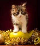 Gato novo que joga com ornamento do Natal Foto de Stock