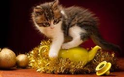 Gato novo que joga com ornamento do Natal Foto de Stock Royalty Free