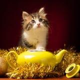 Gato novo que joga com ornamento do Natal Imagens de Stock Royalty Free