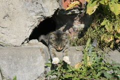 Gato novo que toma sol no sol Imagem de Stock Royalty Free