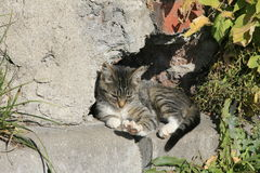 Gato novo que toma sol no sol Fotografia de Stock Royalty Free