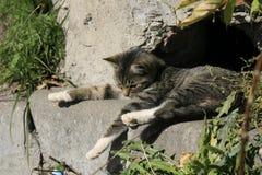 Gato novo que toma sol no sol Imagens de Stock Royalty Free