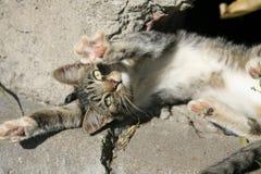 Gato novo que toma sol no sol Fotos de Stock Royalty Free