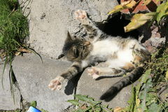 Gato novo que toma sol no sol Imagens de Stock
