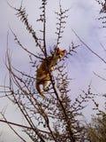 gato o pájaro Imagen de archivo libre de regalías