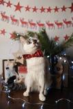 Gato observado pushstny blanco en una corbata de lazo de Borgoña con el modelo bordado en un interior del ` s del Año Nuevo Decor Fotos de archivo