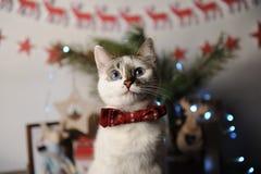 Gato observado pushstny blanco en una corbata de lazo de Borgoña con el modelo bordado en un interior del ` s del Año Nuevo Decor Imagenes de archivo