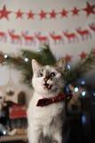 Gato observado pushstny blanco en una corbata de lazo de Borgoña con el modelo bordado en un interior del ` s del Año Nuevo Decor Imagen de archivo