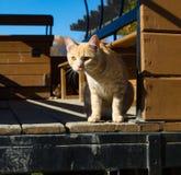 Gato observando a jarda Fotografia de Stock