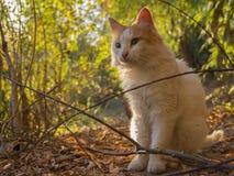 Gato - ojos verdes grandes, mirada Foto de archivo