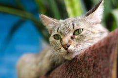 Gato ordinario que miente en el piso en el vestíbulo Foto de archivo