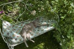 Gato oriental de Lical que dorme no assento de jardim. Imagens de Stock Royalty Free