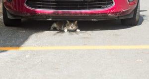 Gato ou gatinho pequeno que escondem sob a parte dianteira do carro Imagens de Stock Royalty Free