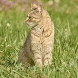 Gato Outbred na grama fotos de stock