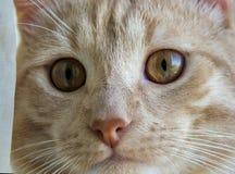 Gato p3 ascendente cercano Fotografía de archivo libre de regalías