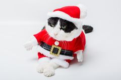 Gato Papai Noel foto de stock royalty free