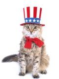 Gato patriótico Fotos de archivo