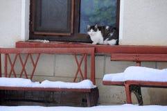 Gato pela janela no dia de inverno Imagem de Stock Royalty Free