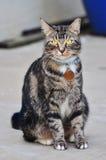 Gato peludo Foto de archivo libre de regalías