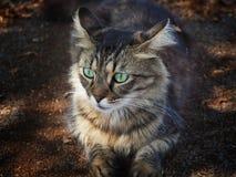 Gato peludo hermoso reflexionado Foto de archivo