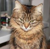 Gato pensativo Foto de archivo